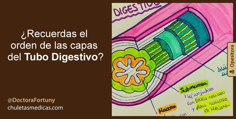 ¿Recuerdas el orden de las capas del Tubo Digestivo?