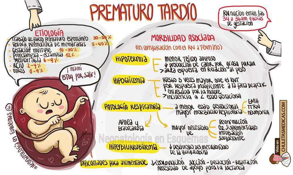 Recién Nacido Prematuro Tardío: Características y comorbilidades chuleta