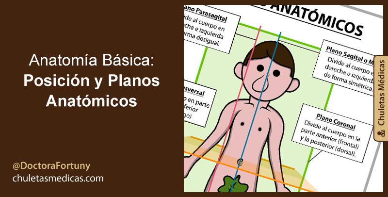 Anatomía Básica: Posición y Planos Anatómicos