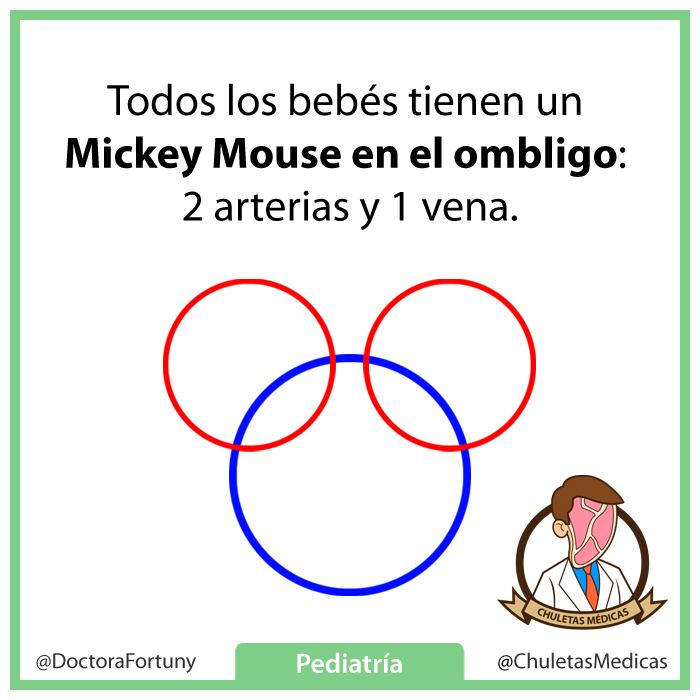 Todos los bebés tienen un Mickey Mouse en el ombligo: 2 arterias y 1 vena