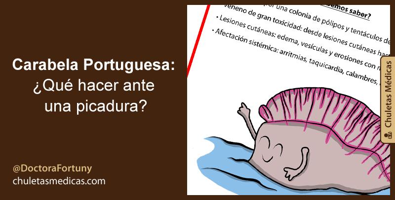 Carabela Portuguesa: ¿Qué hacer ante una picadura?