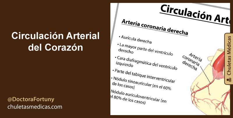 Circulación Arterial del Corazón
